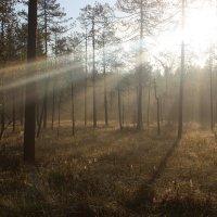 Рассвет в лесу :: Андрей Скорняков