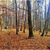 Осенний лес. :: Валерия Комова