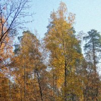 Поздняя осень :: Владимир Бровко