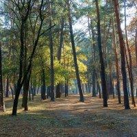 """Осень в парке """"Партизанской славы"""" Фото №3 :: Владимир Бровко"""
