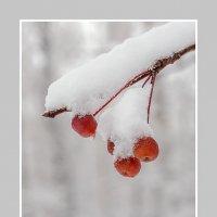 Первый снег. Дичка. :: Евгений Герасименко