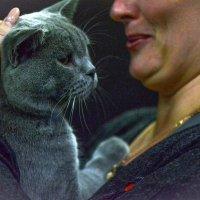 На выставке кошек IV :: Alexei Kopeliovich