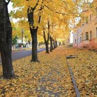 Золотой листопад в южном городе :: Vladimir 070549