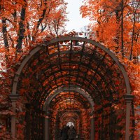 арка летнего :: Анна Брацукова