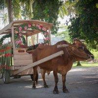 Свадебная карета на острове Ла Диг. :: Сергей Бурлакин