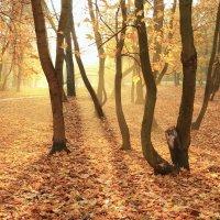 Старый парк.Осень. :: Павел Дунюшкин