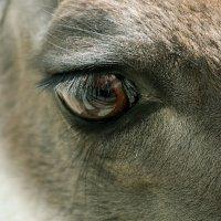 взгляд слона.. :: Надежда Шемякина