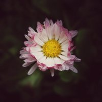 Sweet flower :: Tanya Kozlova