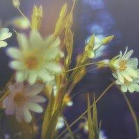 Цветы :: Александр Абакумов