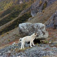 Шаман-камень и наш верный попутчик Белый... :: ирина )))