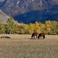 ...снова лошадки... :: ирина )))