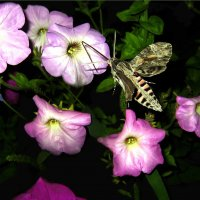 Ночная бабочка :: Николай Ярёменко