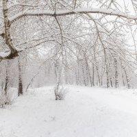 Белый ноябрь :: Евгений Герасименко