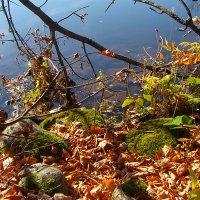 Осенняя меланхолия :: Grey Bishop