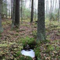 Лесной ручей :: Андрей Скорняков