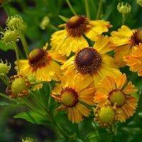 Цветы в нашем саду (этюд 14) :: Константин Жирнов