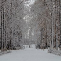 Здравствуй, зимушка-зима! :: Владимир Максимов