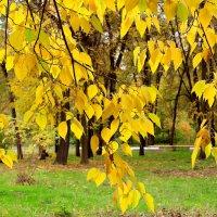 Осень в ботаническом саду :: Светлана