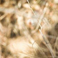 Осенние краски :: Анастасия Митрофанова