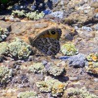 Бабочка на камнях . :: Мила Бовкун