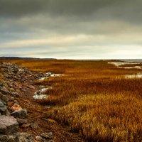 Финский залив :: Рома Григорьев