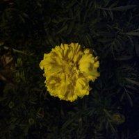 Цветок ночью :: Николай Филоненко