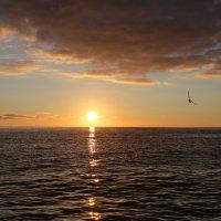 Чайки на закате :: valeriy khlopunov