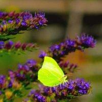 Бабочка :: Андрей Скорняков