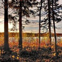Даниковское озеро***** :: Валерий Талашов