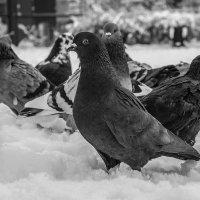 По первому снежку.... :: Юрий Харченко
