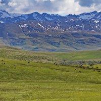 Коровки и альпийские луга :: M Marikfoto
