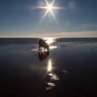 Фродо пьёт из солнечной дорожки... :: Анна Костецкая