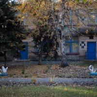 Лебеди) :: Сергей Касимов