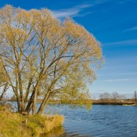 Осенняя река Дубна. :: Виктор Евстратов