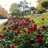 Осенние розы!!! :: ФотоЛюбка *