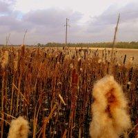камыши на выгоревшей траве :: Александр Прокудин