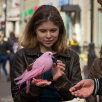 Тоже голубь :: Оксана Пучкова