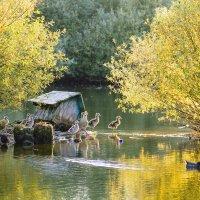 парк :: Константин Прайс
