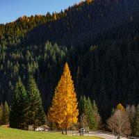Осень :: Юрий Куко'