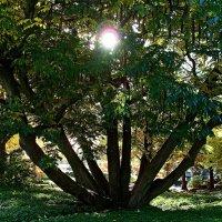 Солнце в гостях у дерева :: Nina Yudicheva