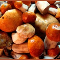 Яркие грибочки :: Лидия (naum.lidiya)