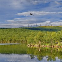 "Из серии "" Озеро Большой лапоть"" :: kolin marsh"