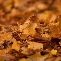 Осень. Листья :: Геннадий Б