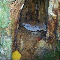 Голубой гриб в дупле. :: Валерия Комова