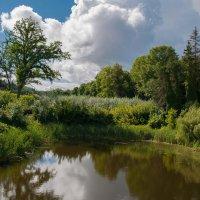 Пруд в графском парке :: Дмитрий Нестеров