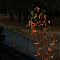 Один на один с осенью.5. :: Ирина Сивовол