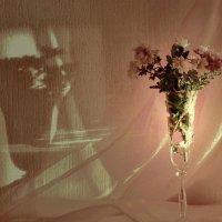 Запоздалые осенние цветы :: Инна
