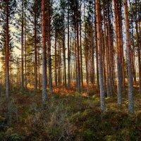 Лес на берегу озера :: Валерий Талашов