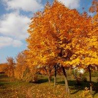 Осень золотая :: оксана косатенко