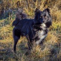 Пёс по кличке Ганс :: Андрей Дворников